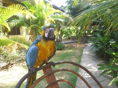 Foton av Amazoniaguesthouse