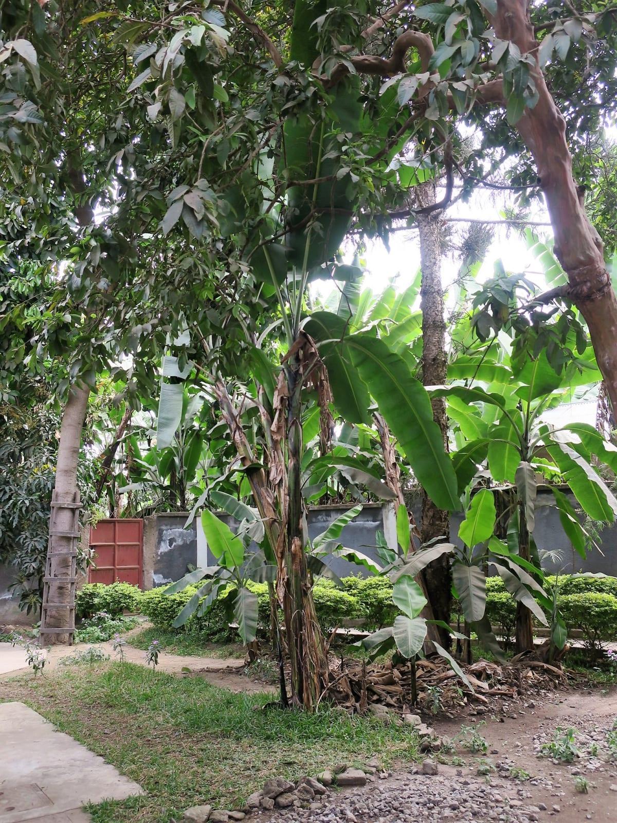 Nyumbani Hostel, Arusha, Tanzania