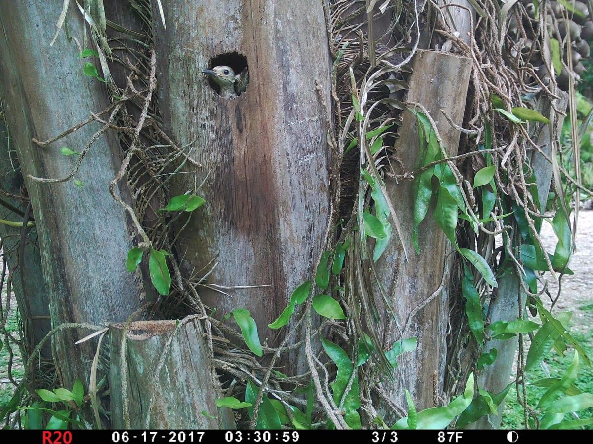 Hidden Haven, San Ignacio, Belize